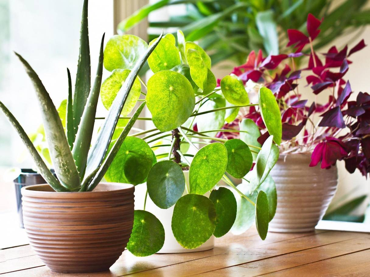 Let's Swap Houseplants!
