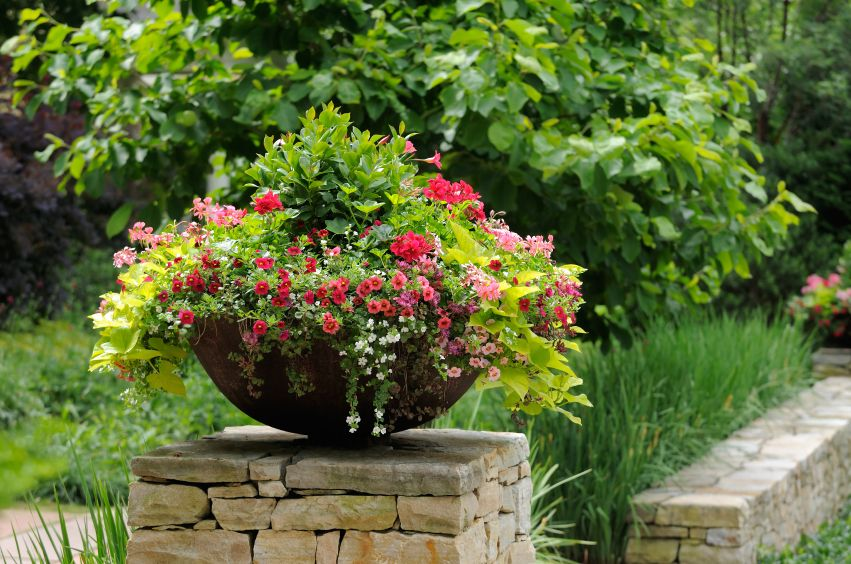Discover Container Gardening
